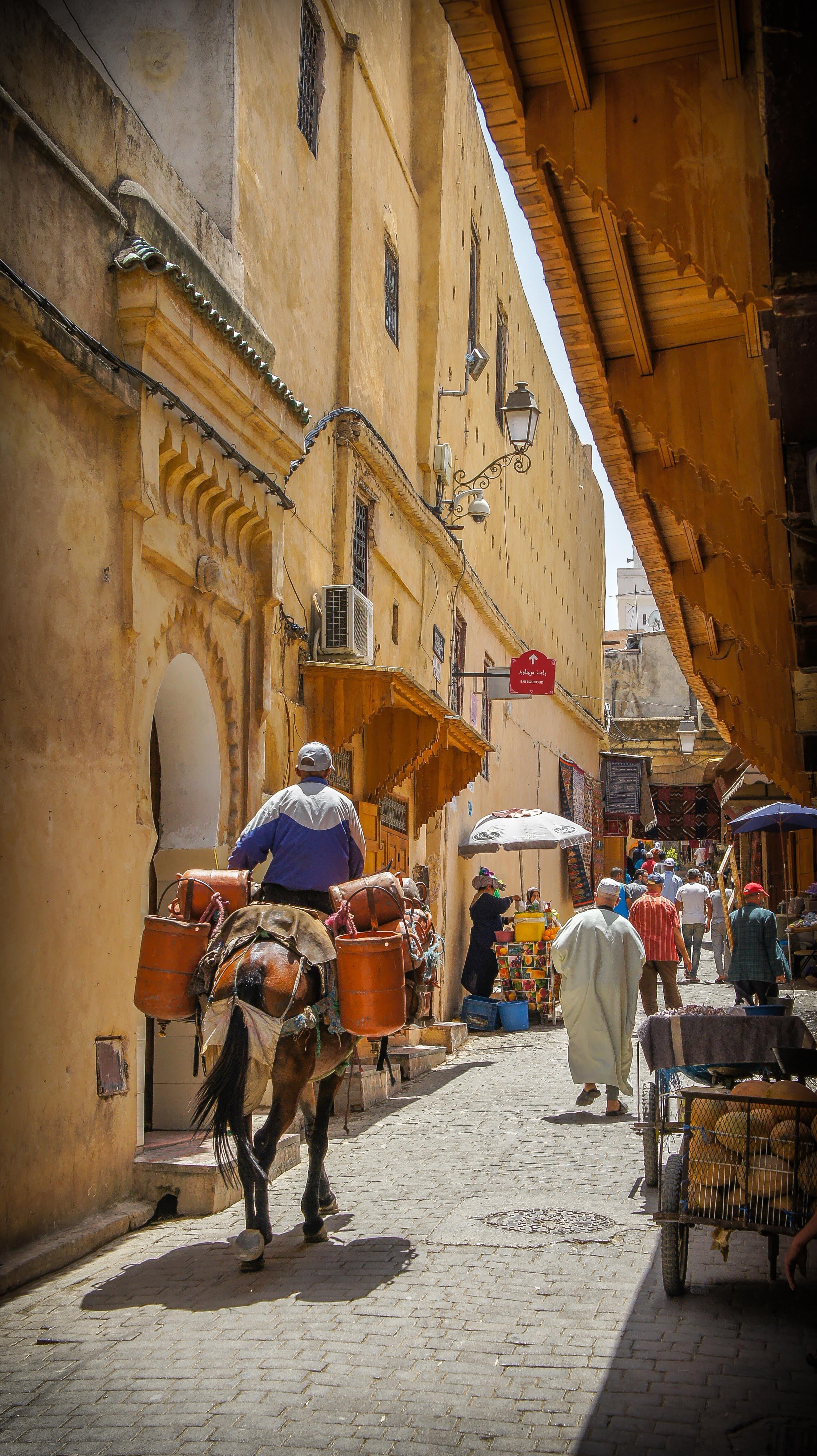 Street donkey along Fez, Morocco