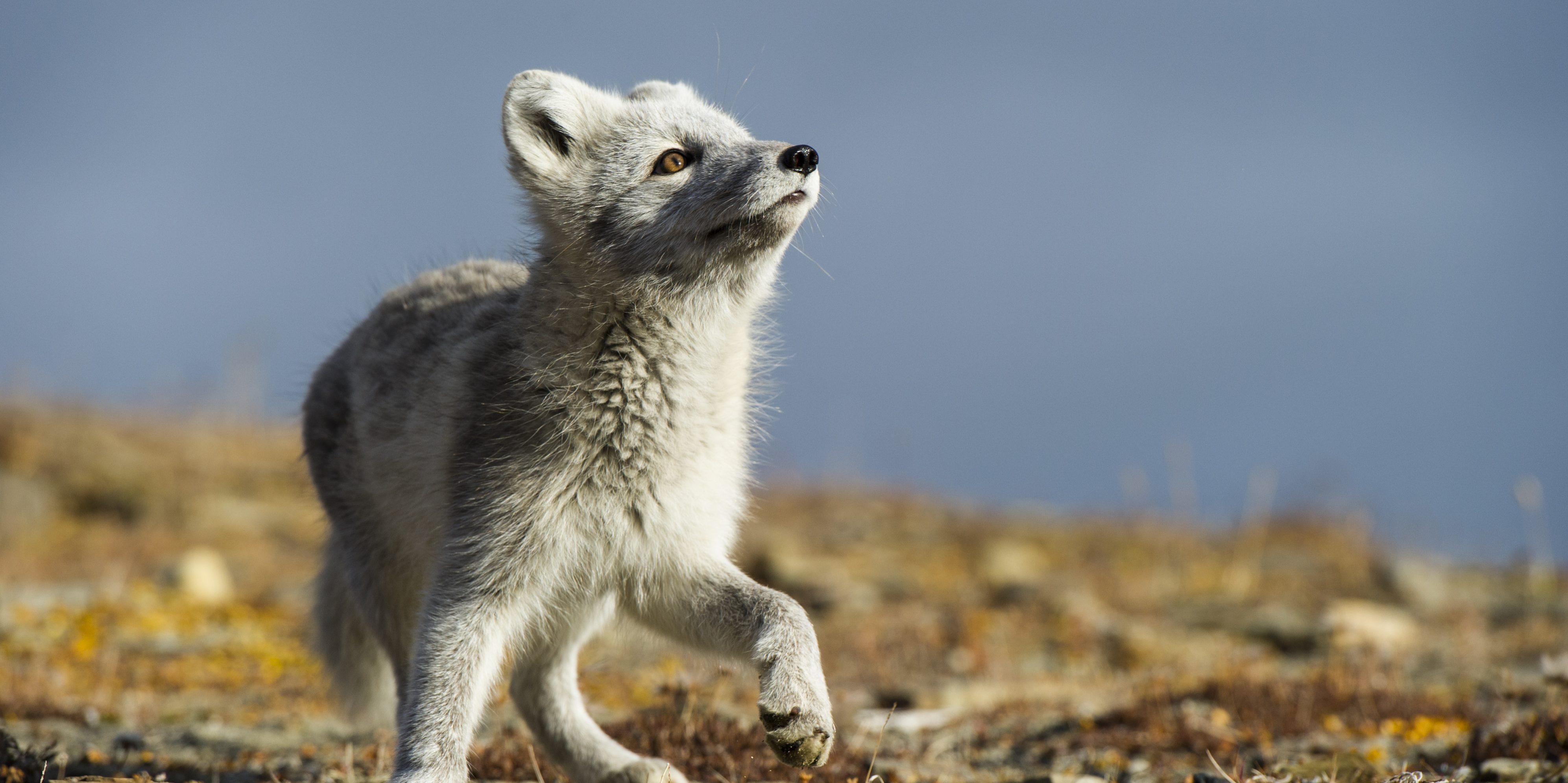 005381_Roy Mangersnes - wildphoto.no_www.nordnorge.com_Longyearbyen