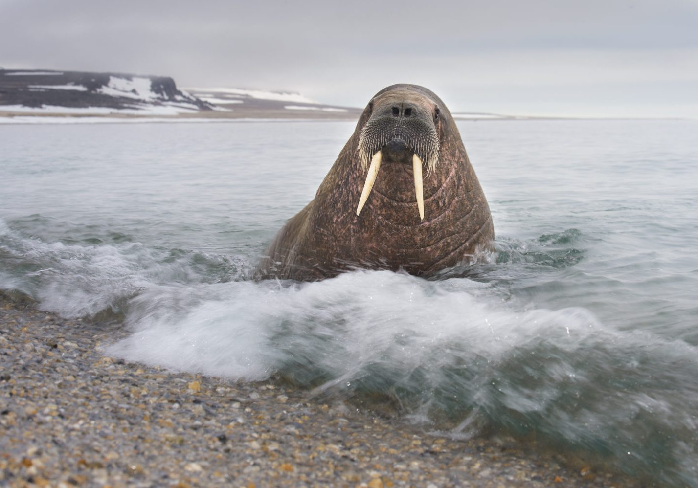 005400_Roy Mangersnes - wildphoto.no_www.nordnorge.com_Longyearbyen
